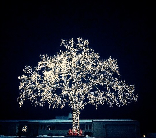 holiday-lights-christmas-tree lighting-mn