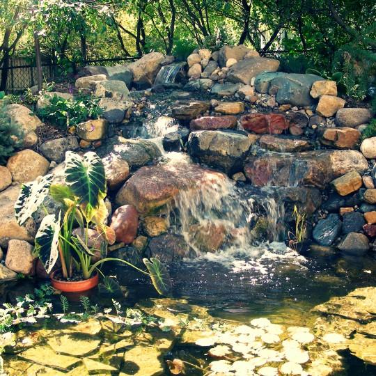 pond-waterfall-water-feature-koi-burnsville-mn